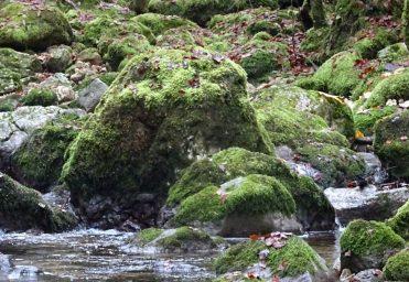 Accompagnement à la création d'un jeu sur les rivières sauvages